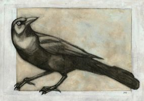 Grackle by Jb-612