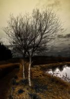 Bare tree by Meekman76