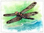 Dragonfly Notes - Bart Castle by bartcastle