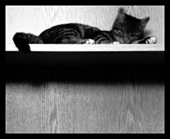 Shelf. by ElectedTheRejected