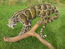 Clouded Leopard by mattcummings