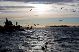 Flying to the sun - Kotka 2 by mep92