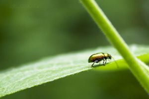 beetle3 by hubert61