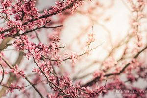 Springs Coming by Alyphoto