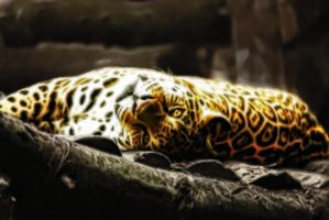 Jaguar - Relaxation 2 by m33mt33n