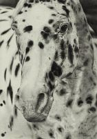 Appaloosa by Ianish