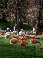 Flamencos by andreuchi