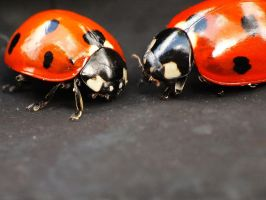 Ladybugs II by Elvira1990