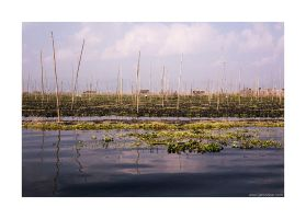 floating gardens on Inle Lake by lightdrafter