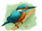Kingfisher by smokewithoutmirrors