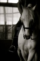 Dressage. by EquusPhoto