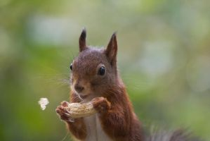 Funny Squirrel by AngelaLouwe