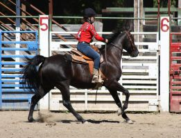 Horse Show Stock 015 by Notorious-Stock