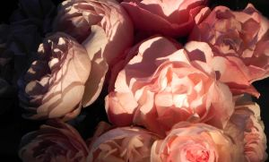 Mysterieuses roses by Citronade-Arts