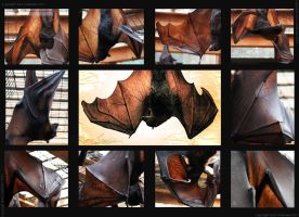 Chiroptera Study by Entophile