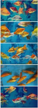 fishes by serhatalbamya