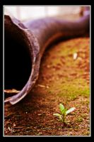 Note the Smallest of Life by TeaPhotography