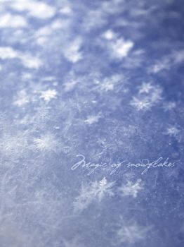 Magic of snowflakes by merrym