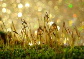 Moss Bokeh by lindahabiba