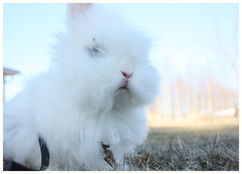 the fluffiest bunny by RRRAI