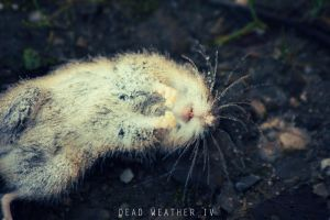 Dead Weather IV by fuel2water