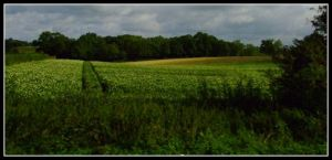 the green country of Ireland by jerry486