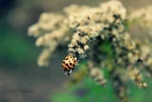 Ladybug in the cold... by Michies-Photographyy