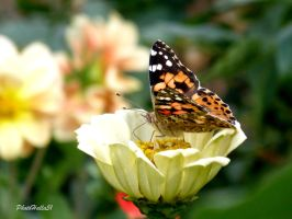 butterfly 466 by Halla51