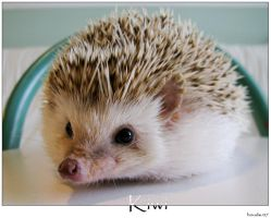 Kiwi the Hedgehog by houde