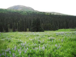 Blue Flowers Meadow 9 by prints-of-stock