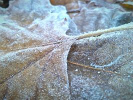 frost on leaves by LivingDEADkitty