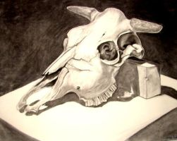 Cow Skull study by LoveoftheDark