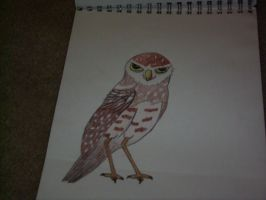 Burrowing Owl by Sapphpaw