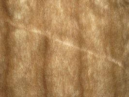 Textures: Fur 001 by VicariousStock
