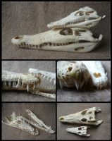 Comparison: Nile Crocodiles by CabinetCuriosities