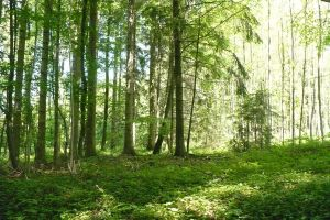 Forest 6 by SelvaStock