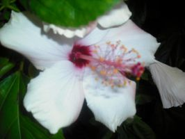 White Flower by Jane2Audron