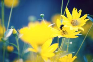 Yellow Flowers II by Freggoboy