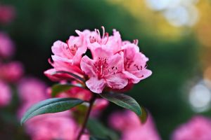 5 Days of Flowers 2014: Day 5d by Henrickson