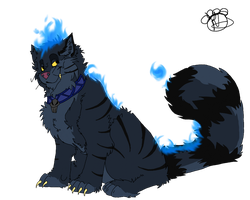 Hades Maine Coon by Para-song
