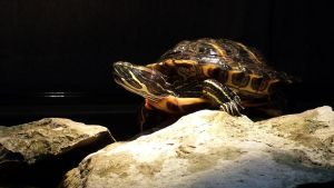 One of my two turtles by artangel85