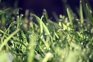 green by tallauviel