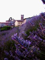 Tuscan lavender by Moonbird9