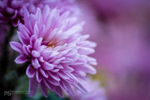 fading to pink by akthuro