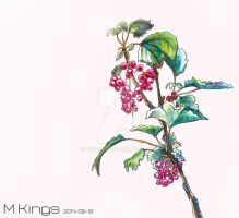 Red Currants by 9Zio6