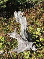 nature's sculpture by onjibarulo