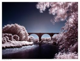 Swanning up the River Wear IR by Wayman