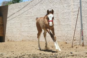Foal 5 by Mustang4-Stock