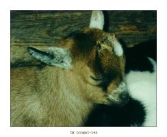 Young goats by nougat-len