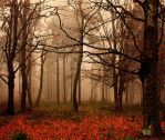autumn by pauljavor